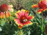 Bee_flower_2