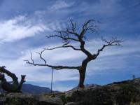 Bermis_tree1_1